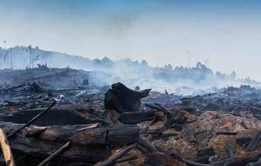 Black Saturday Bushfires' economic legacy